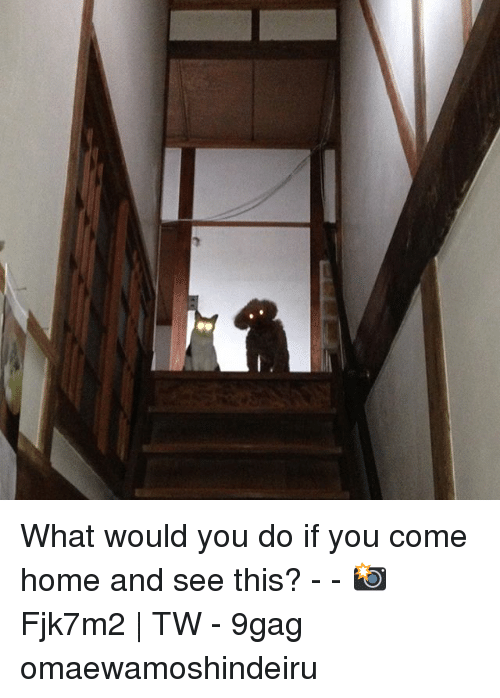 9gag, Memes, and Home: What would you do if you come home and see this? - - 📸Fjk7m2 | TW - 9gag omaewamoshindeiru
