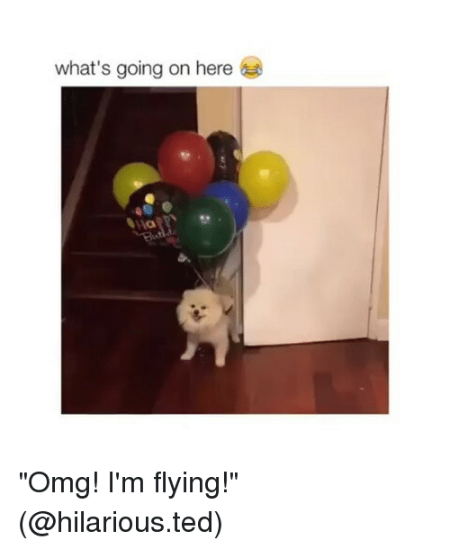 """im flying: what's going on here """"Omg! I'm flying!"""" (@hilarious.ted)"""