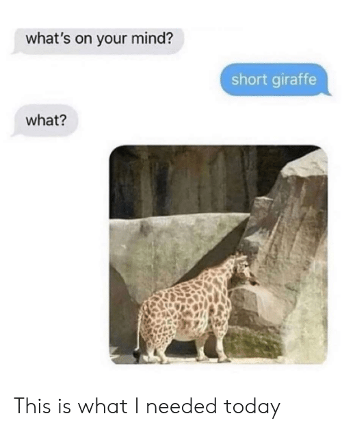 Giraffe, Today, and Mind: what's on your mind?  short giraffe  what? This is what I needed today