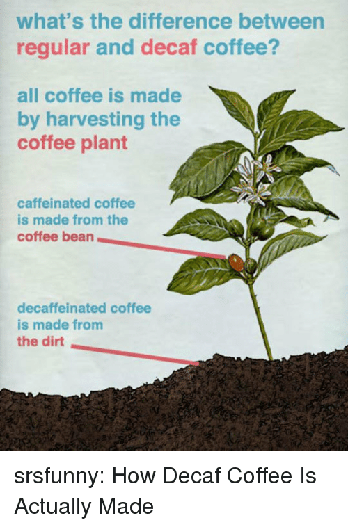 Harvesting: what's the difference between  regular and decaf coffee?  all coffee is made  by harvesting the  coffee plant  caffeinated coffee  is made from the  coffee bean  decaffeinated coffee  is made from  the dirt srsfunny:  How Decaf Coffee Is Actually Made