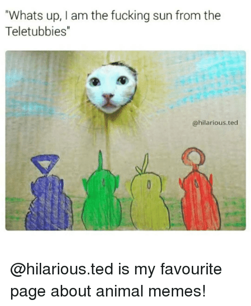 "Animation Meme: Whats up, I am the fucking sun from the  Teletubbies""  @hilarious ted @hilarious.ted is my favourite page about animal memes!"