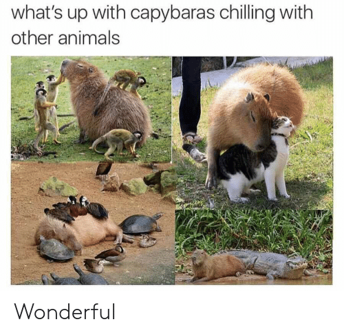 chilling: what's up with capybaras chilling with  other animals Wonderful