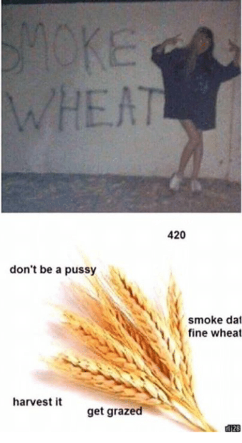 Dont Be A Pussy: WHEAT  420  don't be a pussy  smoke dat  fine wheat  harvest it  get grazed