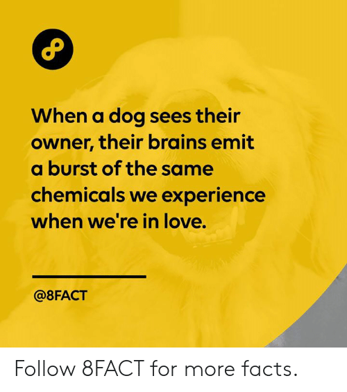 8Fact: When a dog sees their  owner, their brains emit  a burst of the same  chemicals we experience  when we're in love.  @8FACT Follow 8FACT for more facts.