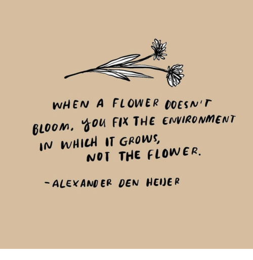 Flower, Alexander, and You: WHEN A FLOWER DOESNT  gloom, You FIX THE ENVIRONMENT  IN WHICH IT GROWS  NOT THE FLOWER.  -ALEXANDER DEN HEJER