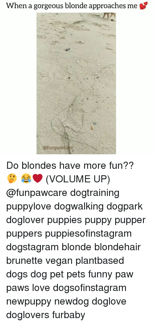 Volume Up: When a gorgeous blonde approaches me  @funpawcare Do blondes have more fun?? 🤔 😂❤️ (VOLUME UP) @funpawcare dogtraining puppylove dogwalking dogpark doglover puppies puppy pupper puppers puppiesofinstagram dogstagram blonde blondehair brunette vegan plantbased dogs dog pet pets funny paw paws love dogsofinstagram newpuppy newdog doglove doglovers furbaby