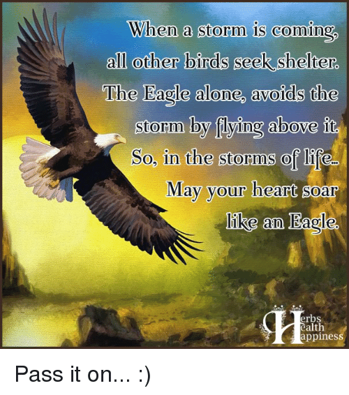 the eagle: When a storm is coming  all other birds seek shelter.  The Eagle alone, avoids the  storm by flying above it.  So, in the storms of life-  May your heart soar  like an Eagle.  erbs  alth  appines Pass it on... :)