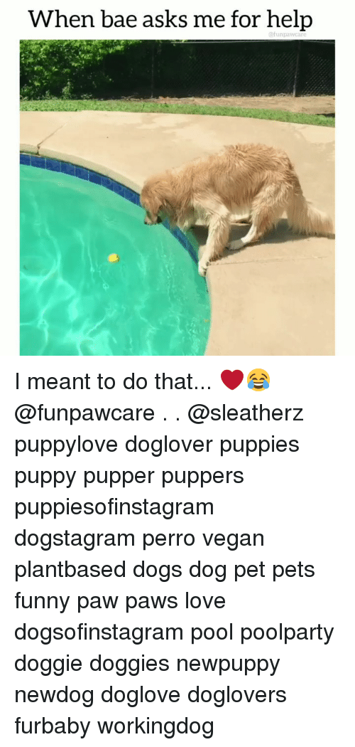Bae, Dogs, and Funny: When bae asks me for help  @funpawcare I meant to do that... ❤️😂 @funpawcare . . @sleatherz puppylove doglover puppies puppy pupper puppers puppiesofinstagram dogstagram perro vegan plantbased dogs dog pet pets funny paw paws love dogsofinstagram pool poolparty doggie doggies newpuppy newdog doglove doglovers furbaby workingdog