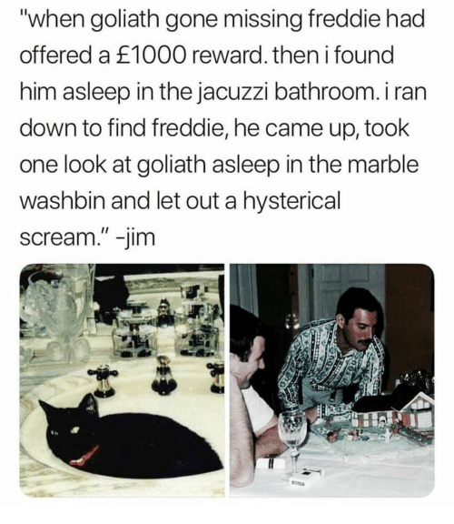 """Scream, Gone, and Him: """"when goliath gone missing freddie had  offered a £1000 reward. then i found  him asleep in the jacuzzi bathroom. i ran  down to find freddie, he came up, took  one look at goliath asleep in the marble  washbin and let out a hysterical  scream."""" -jim"""