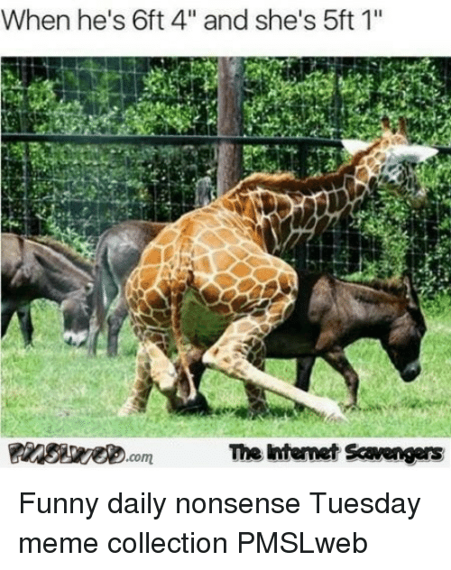 """meme collection: When he's 6ft 4"""" and she's 5ft 1""""  The ntemet Scavengers <p>Funny daily nonsense  Tuesday meme collection  PMSLweb </p>"""