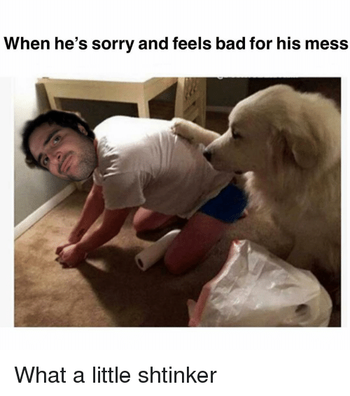 Feels Bad: When he's sorry and feels bad for his mess What a little shtinker