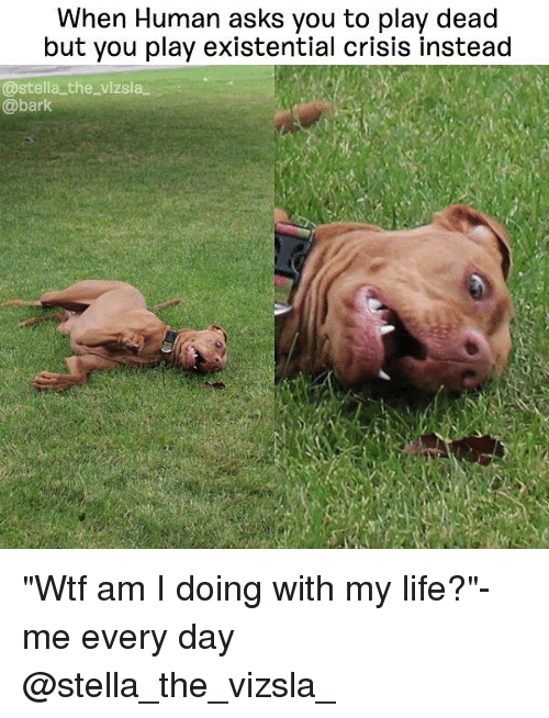 """deads: When Human asks you to play dead  but you play existential crisis instead  @stella the vizsla  @bark """"Wtf am I doing with my life?""""-me every day @stella_the_vizsla_"""