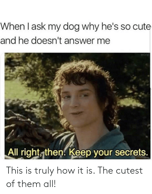 cute: When I ask my dog why he's so cute  and he doesn't answer me  worst  All right, then. Keep your secrets. This is truly how it is. The cutest of them all!