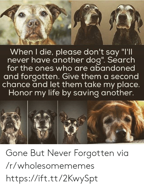 """Life, Search, and Never: When I die, please don't say """"I'll  never have another dog"""". Search  for the ones who are abandoned  and forgotten. Give them a second  chance and let them take my place.  Honor my life by saving another. Gone But Never Forgotten via /r/wholesomememes https://ift.tt/2KwySpt"""