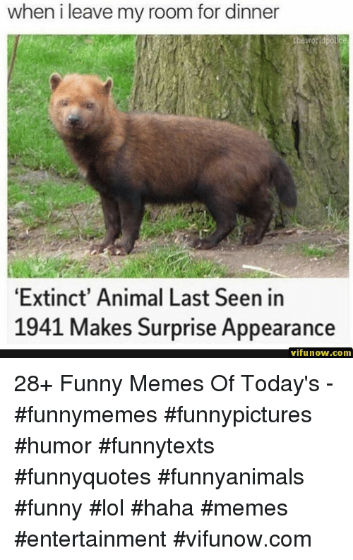 Funny, Lol, and Memes: when i leave my room for dinner  theworldpolice  Extinct' Animal Last Seen in  1941 Makes Surprise Appearance  vifunow.comm 28+ Funny Memes Of Today's - #funnymemes #funnypictures #humor #funnytexts #funnyquotes #funnyanimals #funny #lol #haha #memes #entertainment #vifunow.com