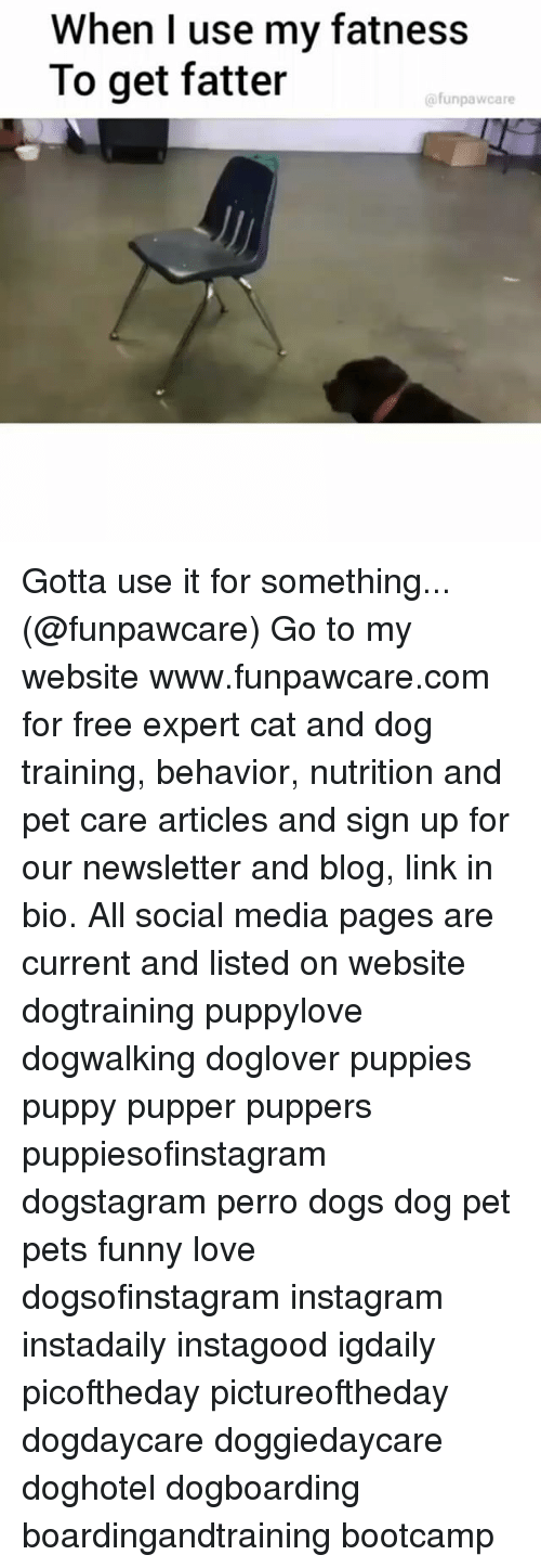 Dogs, Funny, and Instagram: When I use my fatness  To get fatter  @funpawcare Gotta use it for something... (@funpawcare) Go to my website www.funpawcare.com for free expert cat and dog training, behavior, nutrition and pet care articles and sign up for our newsletter and blog, link in bio. All social media pages are current and listed on website dogtraining puppylove dogwalking doglover puppies puppy pupper puppers puppiesofinstagram dogstagram perro dogs dog pet pets funny love dogsofinstagram instagram instadaily instagood igdaily picoftheday pictureoftheday dogdaycare doggiedaycare doghotel dogboarding boardingandtraining bootcamp
