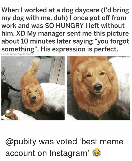 """Hungry, Instagram, and Meme: When I worked at a dog daycare (I'd bring  my dog with me, duh) I once got off from  work and was SO HUNGRY I left without  him. XD My manager sent me this picture  about 10 minutes later saying """"you forgot  something"""". His expression is perfect  Reddit u/powergirlpantie @pubity was voted 'best meme account on Instagram' 😂"""
