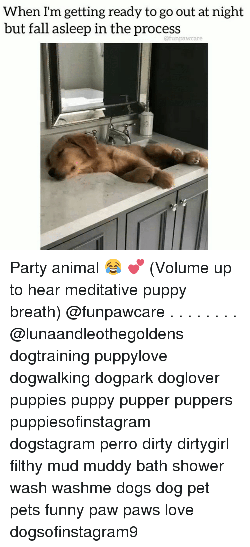 Meditative: When Im getting ready to go out at night  but fall asleep in the process  @funpawcare Party animal 😂 💕 (Volume up to hear meditative puppy breath) @funpawcare . . . . . . . . @lunaandleothegoldens dogtraining puppylove dogwalking dogpark doglover puppies puppy pupper puppers puppiesofinstagram dogstagram perro dirty dirtygirl filthy mud muddy bath shower wash washme dogs dog pet pets funny paw paws love dogsofinstagram9