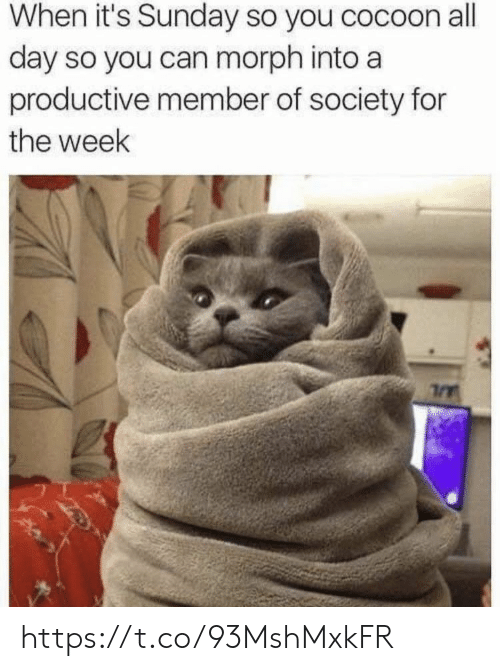 cocoon: When it's Sunday so you cocoon all  day so you can morph into a  productive member of society for  the week https://t.co/93MshMxkFR
