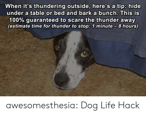 Estimate: When it's thundering outside, here's a tip: hide  under a table or bed and barka bunch. This is  100% guaranteed to scare the thunder away.  (estimate time for thunder to stop: 1 minute-8 hours) awesomesthesia:  Dog Life Hack