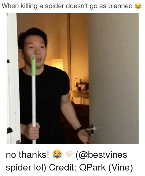 Lol, Memes, and Spider: When killing a spider doesn't go as planned no thanks! 😂 👉🏻(@bestvines spider lol) Credit: QPark (Vine)