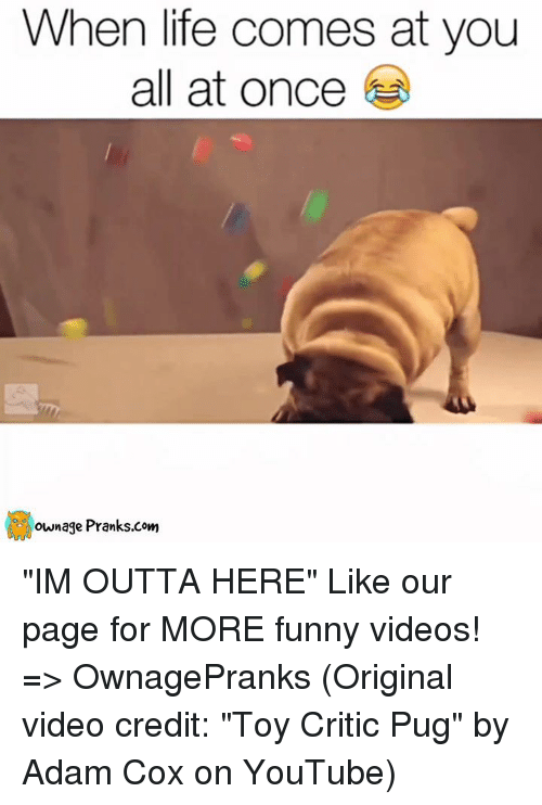 """Im Outta Here: When life comes at you  all at once  ownage Pranks com """"IM OUTTA HERE""""  Like our page for MORE funny videos! => OwnagePranks (Original video credit: """"Toy Critic Pug"""" by Adam Cox on YouTube)"""