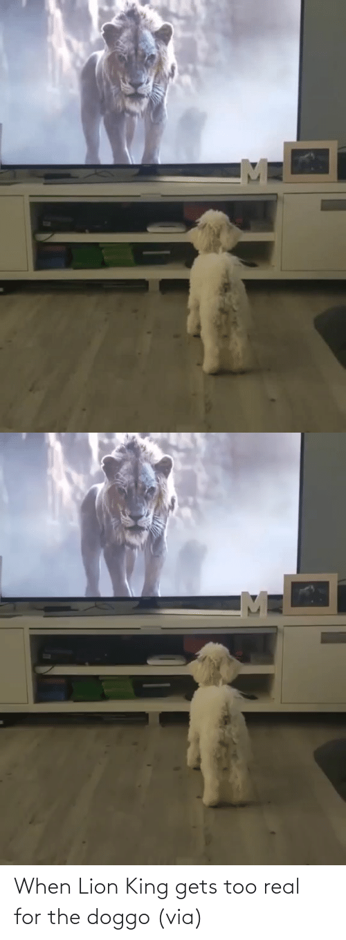king: When Lion King gets too real for the doggo (via)
