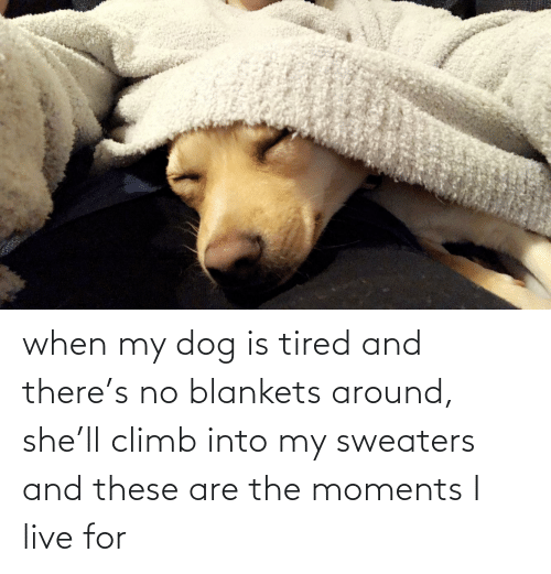 sweaters: when my dog is tired and there's no blankets around, she'll climb into my sweaters and these are the moments I live for