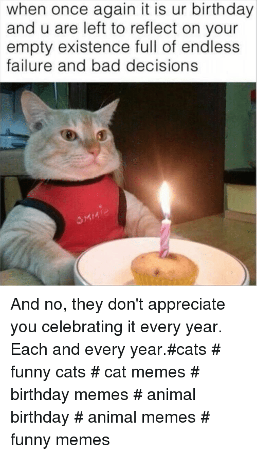 funny cats: when once again it is ur birthday  and u are left to reflect on your  empty existence full of endless  failure and bad decisions And no, they don't appreciate you celebrating it every year. Each and every year.#cats # funny cats # cat memes # birthday memes # animal birthday # animal memes # funny memes
