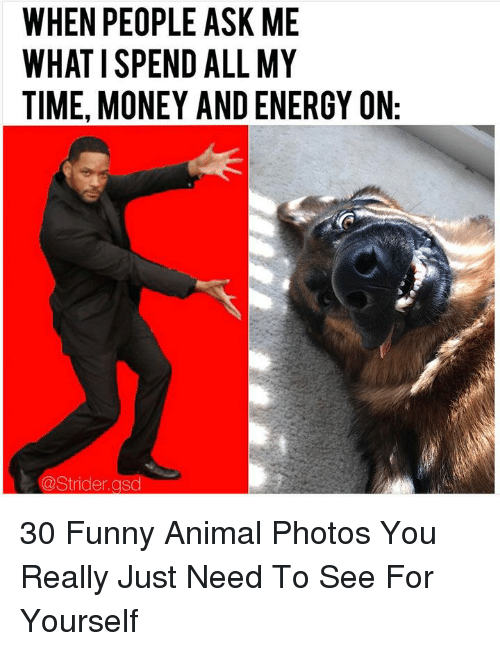 gsd: WHEN PEOPLE ASK ME  WHAT I SPEND ALL MY  TIME, MONEY AND ENERGY ON  @Strider.gsd 30 Funny Animal Photos You Really Just Need To See For Yourself