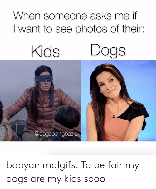 Dogs, Tumblr, and Blog: When someone asks me if  I want to see photos of their:  Kids Dogs  @dogsbeingbasic babyanimalgifs:  To be fair my dogs are my kids sooo