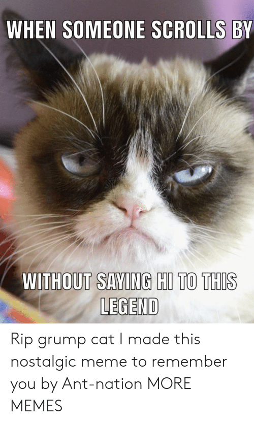 Dank, Meme, and Memes: WHEN SOMEONE SCROLLS BY  WITHOUT SAVING HIL TO THIS  LEGEND Rip grump cat I made this nostalgic meme to remember you by Ant-nation MORE MEMES