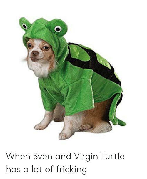 Virgin, Turtle, and  Sven: When Sven and Virgin Turtle has a lot of fricking
