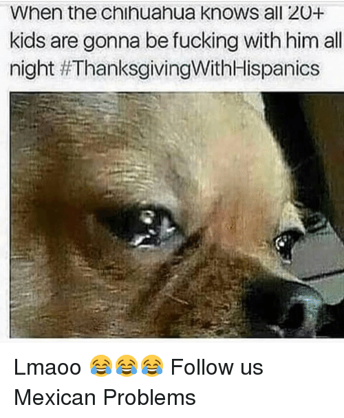 Mexican Problems: When the chihuahua knows all 20+  kids are gonna be fucking with him all  night Lmaoo 😂😂😂  Follow us Mexican Problems