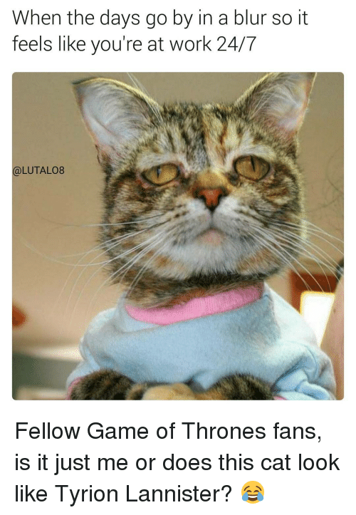 Cat Look: When the days go by in a blur so it  feels like you're at work 24/7  (a)LUTAL08 Fellow Game of Thrones fans, is it just me or does this cat look like Tyrion Lannister? 😂