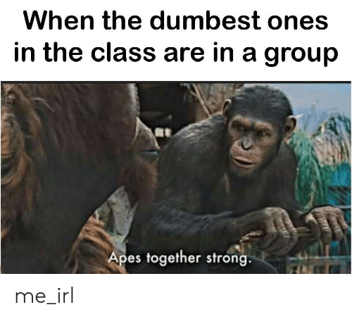 Strong, Irl, and Me IRL: When the dumbest ones  in the class are in a group  Apes together strong me_irl