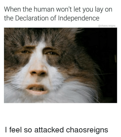 chaos reigns: When the human won't let you lay on  the Declaration of Independence  @chaos.reigns I feel so attacked chaosreigns