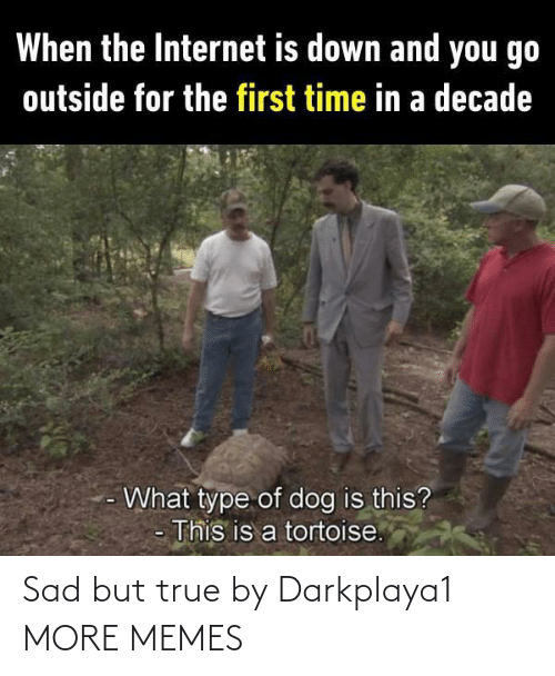 tortoise: When the Internet is down and you go  outside for the first time in a decade  What type of dog is this?  This is a tortoise. Sad but true by Darkplaya1 MORE MEMES