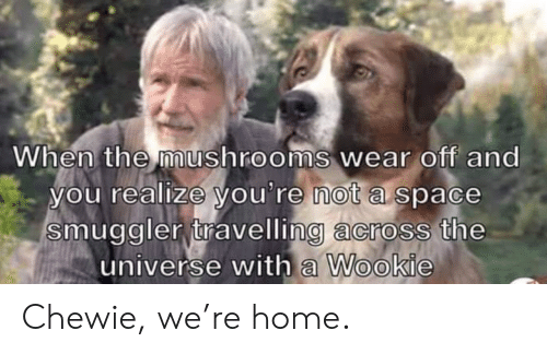 universe: When the mushrooms wear off and  you realize you're not a space  smuggler travelling across the  universe with a Wookie Chewie, we're home.