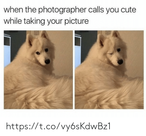 Cute, Memes, and 🤖: when the photographer calls you cute  while taking your picture https://t.co/vy6sKdwBz1