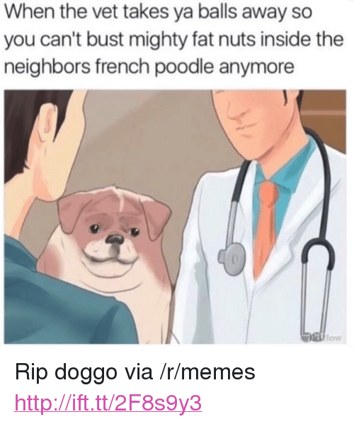 """poodle: When the vet takes ya balls away so  you can't bust mighty fat nuts inside the  neighbors french poodle anymore  low  onN <p>Rip doggo via /r/memes <a href=""""http://ift.tt/2F8s9y3"""">http://ift.tt/2F8s9y3</a></p>"""