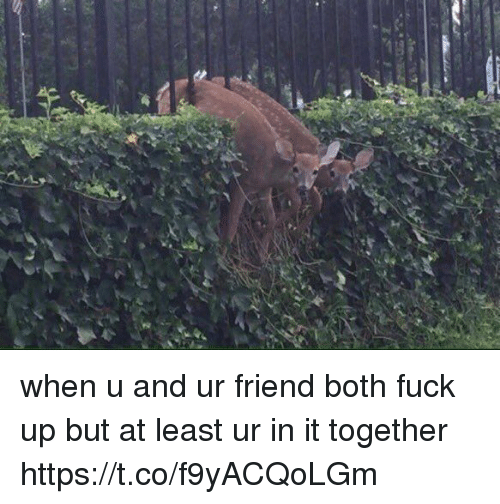coed: when u and ur friend both fuck up but at least ur in it together https://t.co/f9yACQoLGm