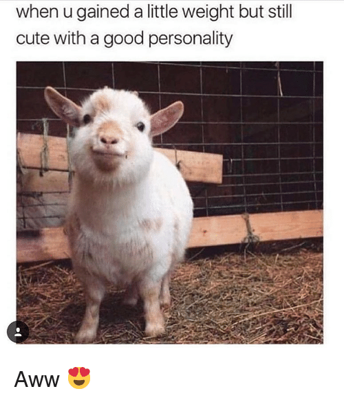 Aww, Cute, and Memes: when u gained a little weight but still  cute with a good personality Aww 😍