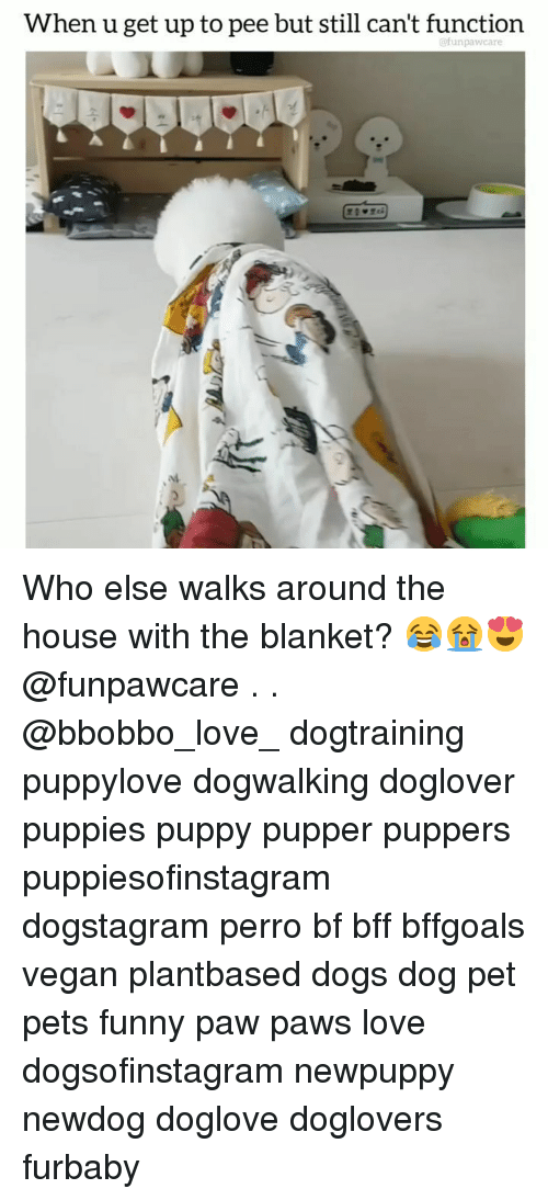 Dogs, Funny, and Love: When u get up to pee but still can't function  @funpawcare Who else walks around the house with the blanket? 😂😭😍 @funpawcare . . @bbobbo_love_ dogtraining puppylove dogwalking doglover puppies puppy pupper puppers puppiesofinstagram dogstagram perro bf bff bffgoals vegan plantbased dogs dog pet pets funny paw paws love dogsofinstagram newpuppy newdog doglove doglovers furbaby
