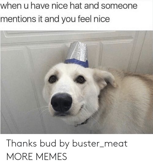 Dank, Memes, and Target: when u have nice hat and someone  mentions it and you feel nice Thanks bud by buster_meat MORE MEMES