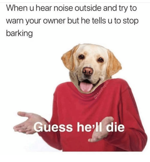 Funny, Guess, and Hell: When u hear noise outside and try to  warn your owner but he tells u to stop  barking  Guess he'll die