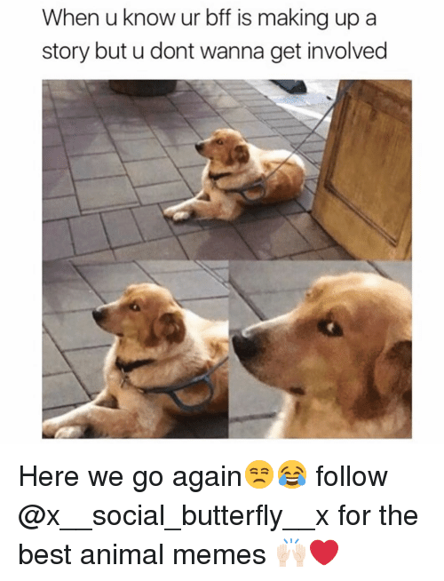 Best Animal Memes: When u know ur bff is making up a  story but u dont wanna get involved Here we go again😒😂 follow @x__social_butterfly__x for the best animal memes 🙌🏻❤️