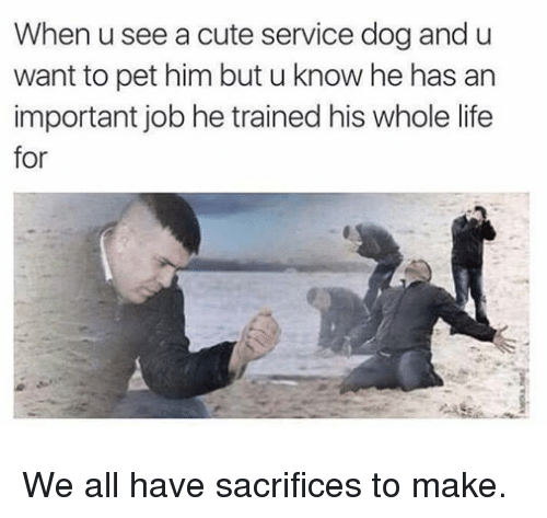 Cute, Life, and Dog: When u see a cute service dog and u  want to pet him but u know he has an  important job he trained his whole life  for We all have sacrifices to make.