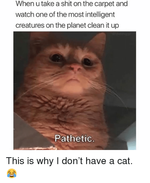Memes, Shit, and Watch: When u take a shit on the carpet and  watch one of the most intelligent  creatures on the planet clean it up  Pathetic This is why I don't have a cat. 😂
