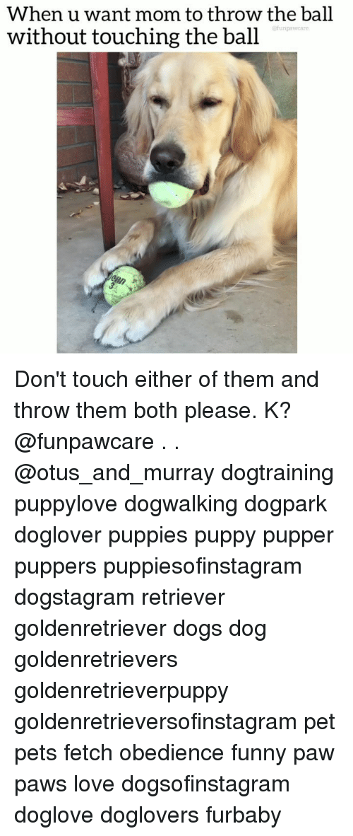Dogs, Funny, and Love: When u want mom to throw the ball  without touching the ball  @funpawcare Don't touch either of them and throw them both please. K? @funpawcare . . @otus_and_murray dogtraining puppylove dogwalking dogpark doglover puppies puppy pupper puppers puppiesofinstagram dogstagram retriever goldenretriever dogs dog goldenretrievers goldenretrieverpuppy goldenretrieversofinstagram pet pets fetch obedience funny paw paws love dogsofinstagram doglove doglovers furbaby